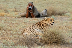 gepard-mit-fotograf-100~_v-gseapremiumxl